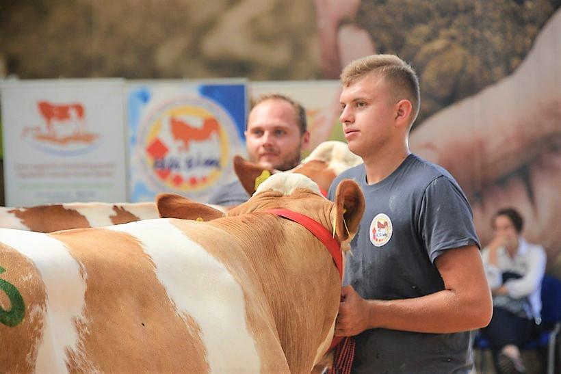 POGLED U BOLJE SUTRA Mladi uzgajivači goveda Dejan i Nikola predvodili svoje šampionke