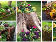 Inspirace na květiny ve starém kusu dřeva