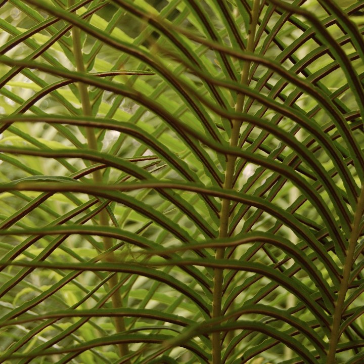 ferns, Lincoln Park Conservatory, waves