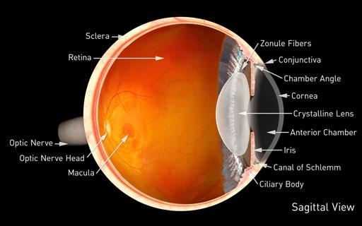 Corneal Services | Primary Eye Care