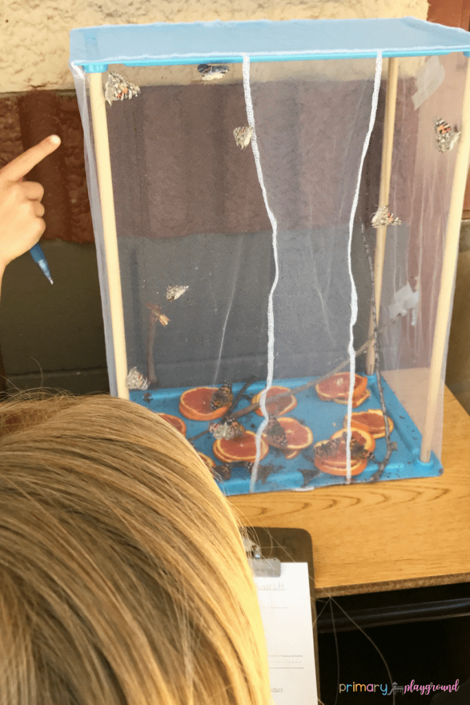 Butterflies In the classroom