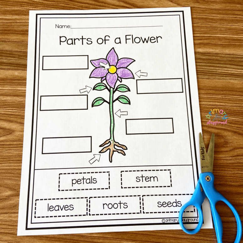 Parts Of A Flower Free Printable