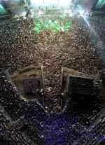 Exit festival - « Dance arena » - Licence 2.0 2015- flickr.com - 1920 X 2657 - JPG 40 % - 445 KB