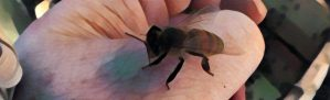 Painting of a resting honey bee on a hand