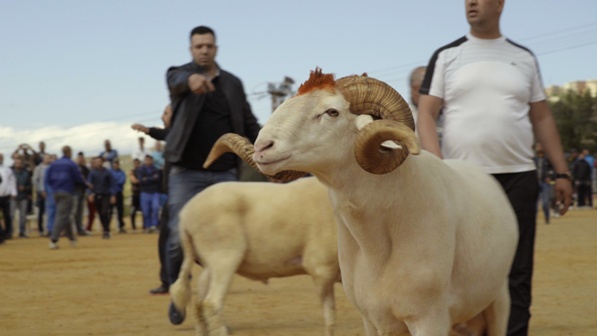 moutons-hommes-film