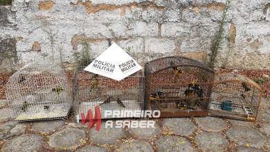 Photo of Homem é autuado em mais de R$ 30 mil por manter pássaros silvestres em cativeiro