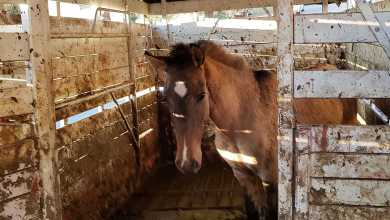 Photo of Viu animal de médio e grande porte na rua: denuncie!
