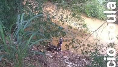 Photo of PM recupera moto produto de crime em Guiricema