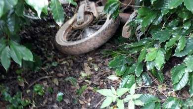 Photo of Motocicleta roubada é localizada em Ervália