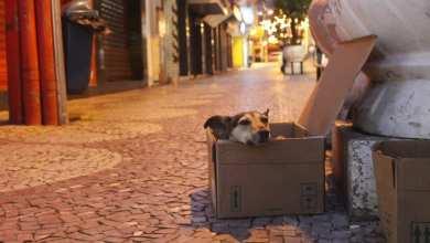 Foto de Prefeitura de Viçosa registrou 71 denúncias de maus-tratos a animais em 2019