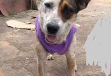 Photo of Adote a Jade: cachorrinha está há mais de cinco meses à espera de um lar