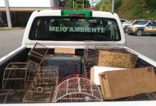 Photo of MPMG deflagra Operação 'Libertas' para combate ao tráfico de animais silvestres em Viçosa e diversas cidades do estado