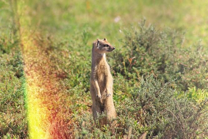 Timão - Safári na África - Addo Park