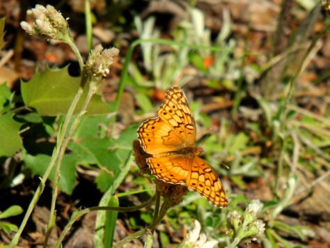 butterfly on the trail