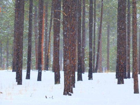 WinterHikingSouthernRockies - pDSCF4522.jpg