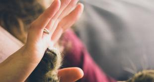 Connecting with Your Pet as a Psychic