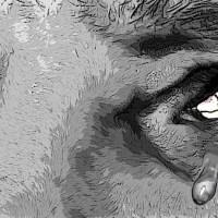 Las lágrimas del Perro || Cuento de Melissa Tarabay
