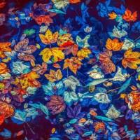 «Y mi cuerpo no ha muerto»: Las flores de Adriana Cupul Itzá