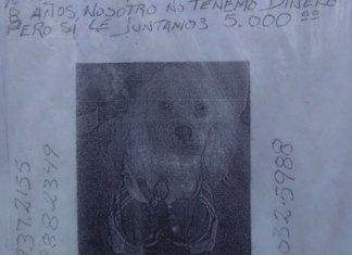 Viejitos ofrecen 5 mil pesos para recuperar a su perrito robado