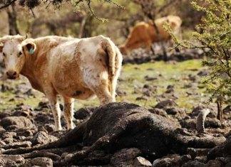 Sader declara desastre natural en 9 municipios de Durango por sequía