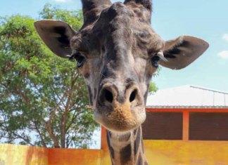 Reinicia zoológico de NLD sus visitas este viernes