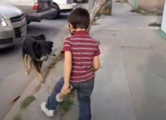 Se viraliza al hacer reportaje sobre perritos callejeros