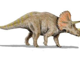 Encuentran restos fosilizados de dinosaurio con cuernos