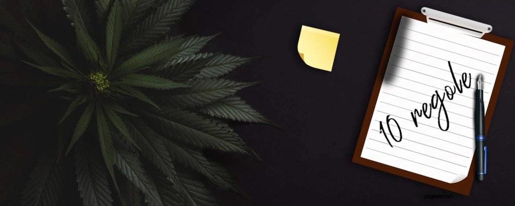 PrimeroRoma-numero-1-del-cbd-online-10-regole-per-coltivare-cannabis