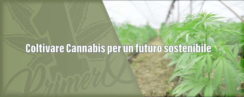 coltivare-cannabis-per-un-futuro-sostenibile-1