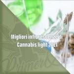 migliori-infiorescenze-di-cannabis-light-2021