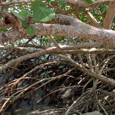 calderitas-chetumal-quintana-roo-14