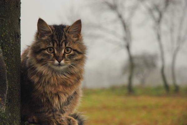 Почему в доме не приживаются животные. Почему в доме не приживаются кошки