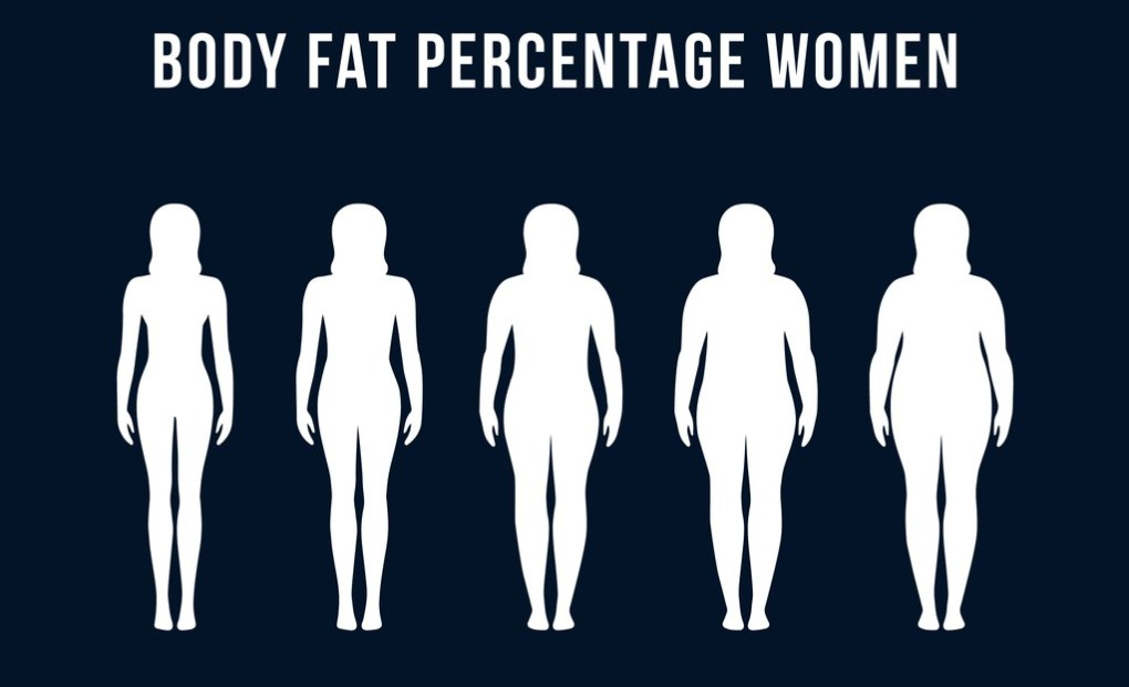 body fat percentage vector for woman