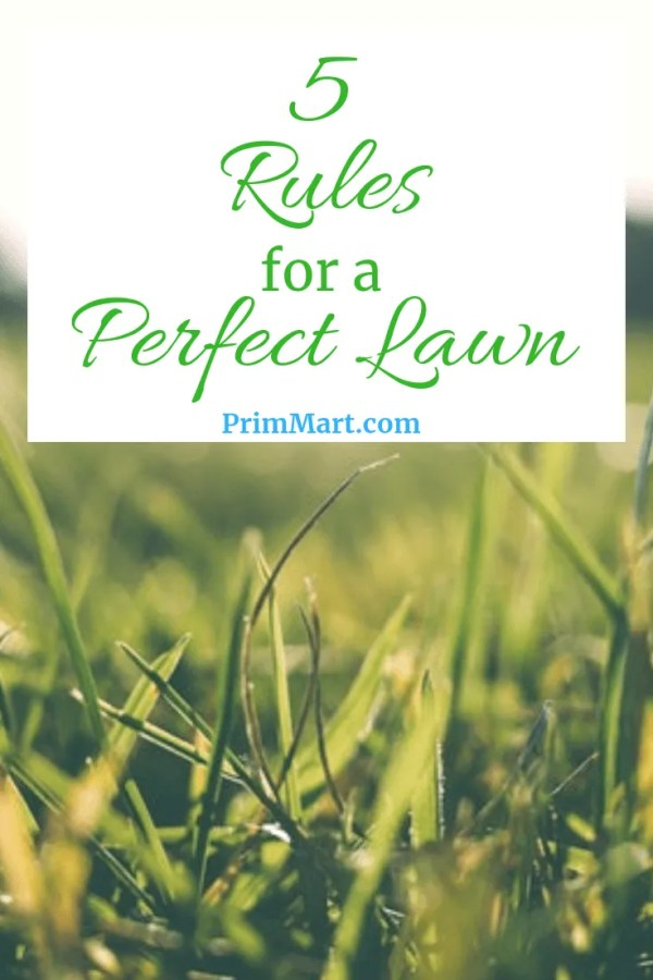 5 Rules To Follow For A Perfect Lawn