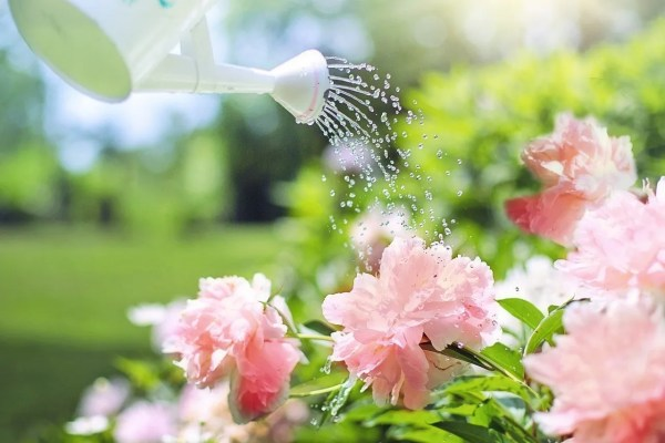How to Get the Perfect Garden - Watering plants