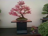 A glorious bonsai tree!