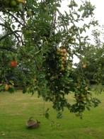 Low-hanging fruit!