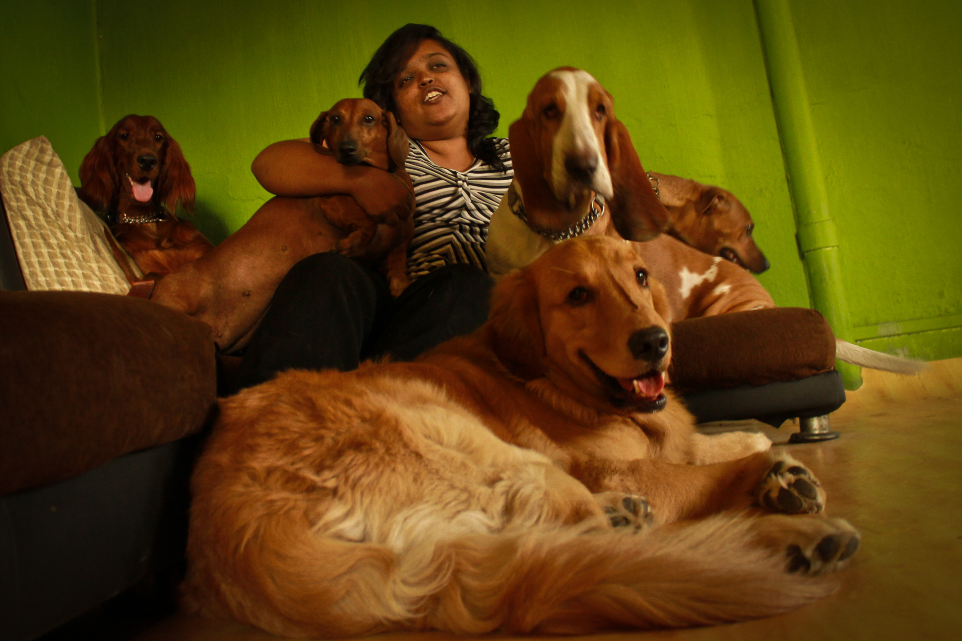 Ask the Pet Sitter