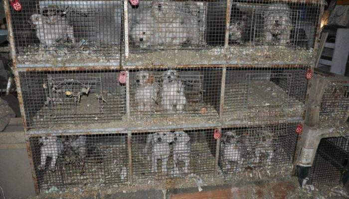 The Only Hell For Dogs – Puppy Mills