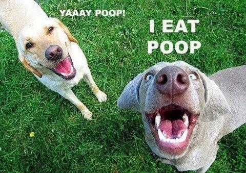 Yelp!! My Dog Eats His Poop