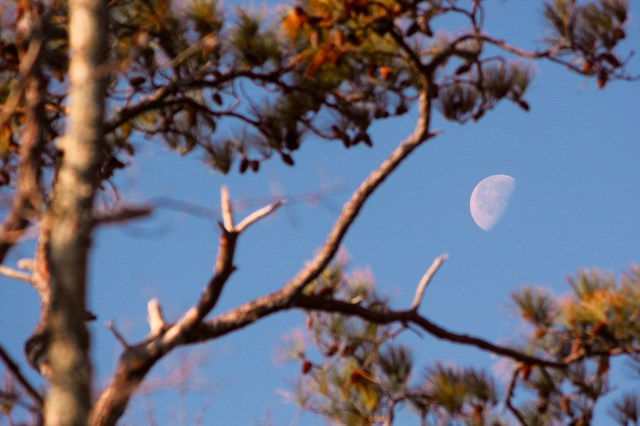 Morning moon over the refuge. [John-Henry Doucette/The Princess Anne Independent News]