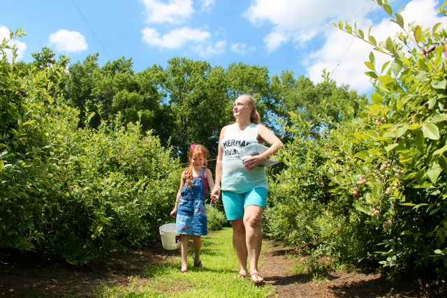 Paula Smith, 54, of Salem Woods, walks with Zoe Phillips, 5, her granddaughter, at Pungo Blueberries, Etc., on Wednesday, June 29. Smith visited the farm to pick berries with family, some of whom were visiting from out of state. Members of the family said they expected to make cobbler with some of their haul. [John-Henry Doucette/The Princess Anne Independent News]