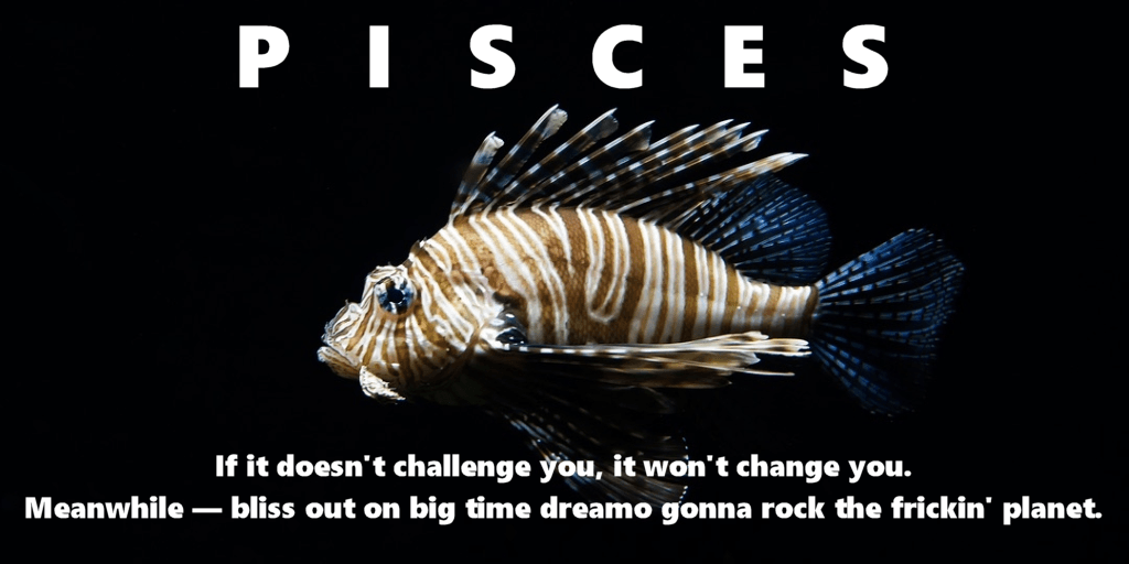 reach for the stars with pisces motivation fish