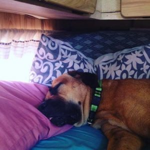 Girl Dog recovering from NYE | Princess In A Caravan travel blogger