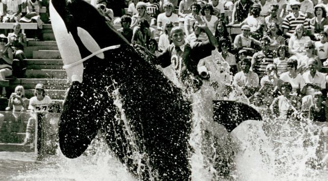 Blackfish: Fear and Loving in Orlando