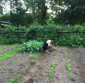 Volunteers lending some helping hands in weeding the garden!