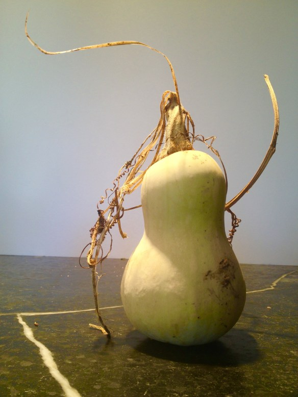SQUASHED: Butternut squash is in season for Thanksgiving in the Garden State.