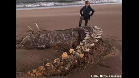 'Sea Monster' Remains Found on Scottish Beach Sea-monster
