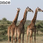 Tag børnene med på ferie til Afrika