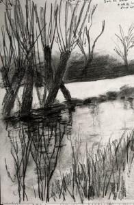 Willow sketch crop